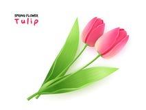 Vectorillustratie van de realistische bloem van de de lente bloeiende tulp met bladeren stock illustratie
