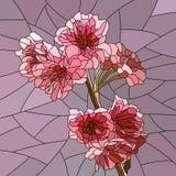 Vectorillustratie van de tak van de kersenboom met bloemen. Royalty-vrije Stock Fotografie