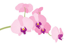 Vectorillustratie van de tak van de orchideebloem Royalty-vrije Stock Fotografie