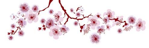 Vectorillustratie van decoratieve sakuratak Stock Fotografie