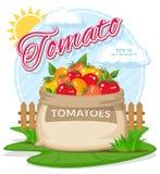 Vectorillustratie van ecoproducten Rijpe Tomaten in jutezak Royalty-vrije Stock Foto