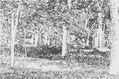 Vectorillustratie van een aardlandschap in zwart-witte ton Stock Foto's
