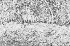 Vectorillustratie van een aardlandschap in zwart-witte ton Stock Foto