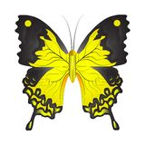 Vectorillustratie van een gele vlinder vector illustratie
