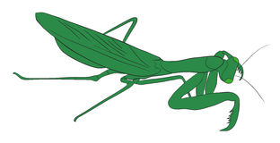 Vectorillustratie van een insect Royalty-vrije Stock Fotografie