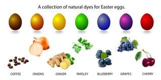 Vectorillustratie van een inzameling van natuurlijke kleurstoffen voor paaseieren vector illustratie