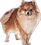 Vectorillustratie van een Pomeranian-Hond royalty-vrije stock afbeelding