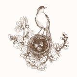 Vectorillustratie van hand getrokken nest met bevlekte eieren en vogel op bloeiende brunch Grafische mooie stijl, stock illustratie
