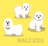 Vectorillustratie van het hond de Maltese Beeldverhaal Stock Foto