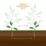 Vectorillustratie van het juiste planten Het uit elkaar plaatsen tussen installaties Het planten van afstandengids Het optimale a Stock Fotografie