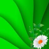 Vectorillustratie van kamillebloem Stock Fotografie