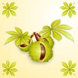 Vectorillustratie van kastanjetak en bladeren Royalty-vrije Stock Afbeelding
