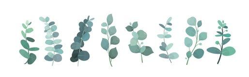 Vectorillustratie van reeks, de bladeren en de takken van het eucalyptus de zilveren groen voor decoratie van groetkaarten en royalty-vrije illustratie