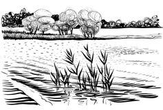 Vectorillustratie van rivierlandschap met cattail en bomen Stock Foto's