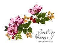 Vectorillustratie van rozebottelbessen en bloesem vector illustratie