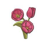 Vectorillustratie van tulpen Royalty-vrije Stock Afbeeldingen