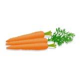 Vectorillustratie van verse die wortelen op witte achtergrond wordt geïsoleerd Royalty-vrije Stock Foto