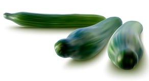 Vectorillustratie van verse komkommers vector illustratie