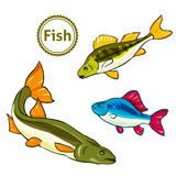 Vectorillustratie van vissen Royalty-vrije Illustratie