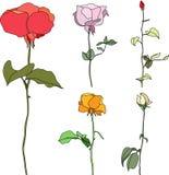 Vectorillustratie vastgestelde multicolored rozen vector illustratie
