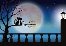 Vectorillustraties, Kattenparen die op de mooie maan letten Royalty-vrije Stock Afbeeldingen