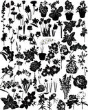 Vectorinzameling van bloemen Stock Afbeeldingen