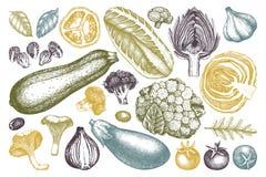 Vectorinzameling van hand geschetste groenten Wijnoogst veggies en geplaatste kruidenillustraties Gezonde voedseltekeningen voor  royalty-vrije illustratie