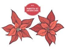 Vectorinzameling van hand getrokken pionsettia stock fotografie