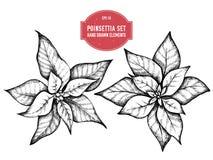 Vectorinzameling van hand getrokken pionsettia stock afbeeldingen