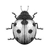 Vectorized Ink Sketch of a Ladybug Stock Photography