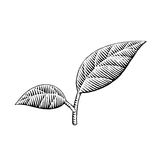 Vectorized Ink Sketch of Leaves Royalty Free Stock Photography