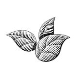 Vectorized Ink Sketch of Leaves Royalty Free Stock Images