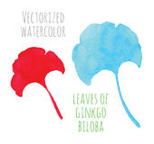 Vectorized watercolor hand drawing eaf of Ginkgo Stock Photos