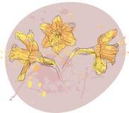 Vectorized Zeichnung der Narzisse Stockbild