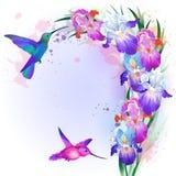 Vectorkaart met Irisbloemen en kolibrie Stock Foto
