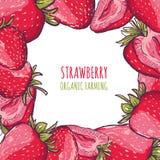 Vectorkader met rode aardbeien op witte achtergrond De zomerachtergrond met illustratie van organische landbouwbedrijfbessen stock illustratie