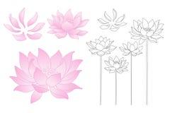 Vectorlotusbloembloemen Stock Afbeeldingen