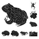 Vectorontwerp van fauna en reptielpictogram Inzameling van fauna en anuranvoorraadsymbool voor Web vector illustratie