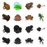 Vectorontwerp van het wild en moeraspictogram Inzameling van het wild en reptielvoorraad vectorillustratie stock illustratie
