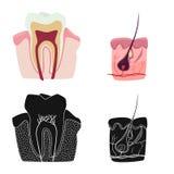 Vectorontwerp van lichaam en menselijk embleem Reeks van lichaam en medische voorraad vectorillustratie stock illustratie