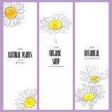 Vectorontwerpmalplaatje met bloemen van madeliefje vector illustratie