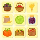 Vectoroogst vlak pictogrammen het oogsten materiaal voor landbouw en tuinbouw, gezonde natuurlijke vruchten en handhulpmiddelen Stock Afbeelding