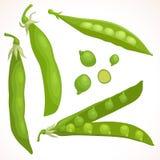 Vectorpeulen van groene erwten Stock Afbeelding