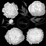 Vectorpioenen Reeks geïsoleerde zwart-wit witte bloemen op een zwarte achtergrond Malplaatje voor bloemendecoratie, stoffenontwer royalty-vrije illustratie