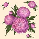 Vectorpioenen Reeks ge?soleerde roze-lilac bloemen Boeketten van bloemen op een beige achtergrond Malplaatje voor bloemendecorati stock illustratie