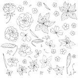 Vectorreeks bloemen en bladeren Royalty-vrije Stock Afbeeldingen
