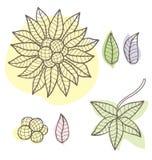 Vectorreeks bloemenelementen vector illustratie