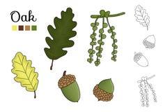 Vectorreeks eiken die boomelementen op witte achtergrond worden ge?soleerd stock illustratie