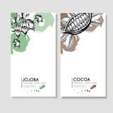 Vectorreeks haarverzorgingingrediënten Organische hand getrokken elementen Vliegers met jojoba en cacao Royalty-vrije Stock Foto