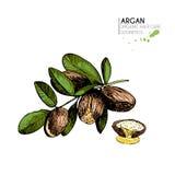 Vectorreeks haarverzorgingingrediënten Organische hand getrokken kleurenelementen Argan notentak en half Stock Foto
